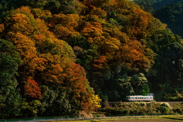 Relax and rejuvenate in the remote countryside of Mie Prefecture