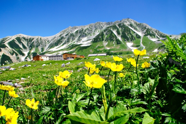 Alpine scenery made easy: 4 seasons at the Tateyama Kurobe Alpine Route
