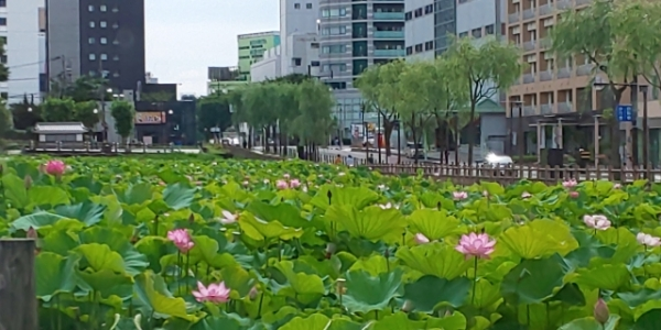 Undiscovered Akita: 7 places to visit in Akita City
