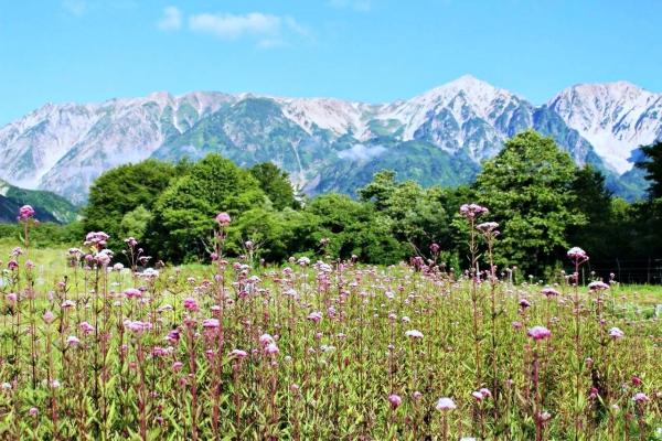 Hakuba mùa hạ: Phong cảnh...
