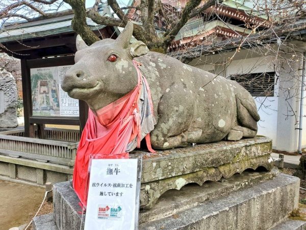 Ushi in the new year: Lottery of the lucky cow at Kyoto's Kitano Tenmangu