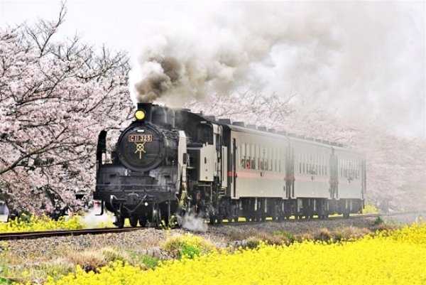Go loco for sakura: At-track-tive views of trains and cherry blossoms