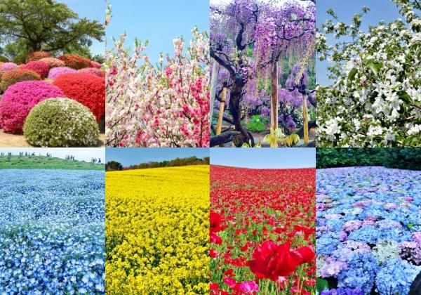 Fantasi bunga: 12 bunga berwarna-warni untuk dinikmati di musim semi