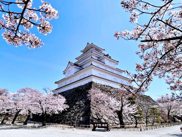 Ngắm hoa anh đào ở Aizu-...