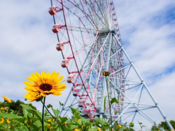 Kasai Rinkai Park: Tokyo's largest park, a river away from Tokyo Disney Resort