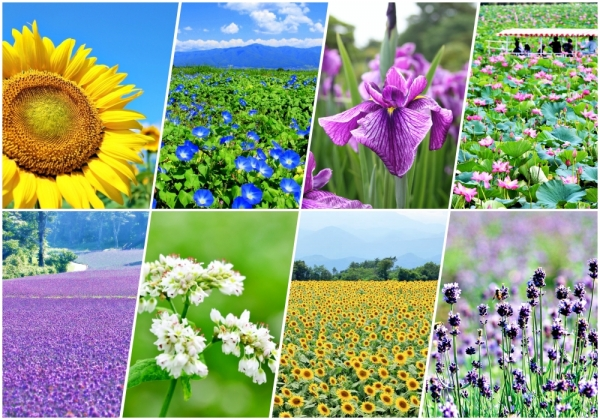 Summer symphony: 7 Beautiful blossoms to enjoy in summer